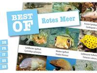 Dive-Sticker (8 Bogen mit total 96 Selbstklebe-Bildern inkl. ID in deutsch/lateinisch) - Rotes Meer