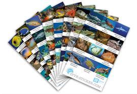 Dive-Sticker (8 Bogen mit total 96 Selbstklebe-Bildern inkl. ID in deutsch/lateinisch)