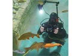 Fotokurs im Wasser: Einsatz von künstlichem Licht (Blitz / Lampe)