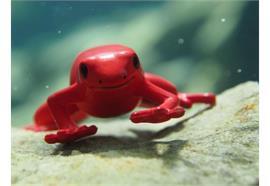 Fotokurs im Wasser: Unterwasser-Fotografie Makro