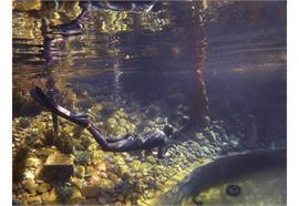 Fotokurs im Wasser für FREEDIVER: Basic-Kombo UW-Foto Grundkurs + Licht