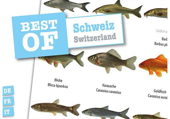 Dive-Sticker (8 Bogen mit total 96 Selbstklebe-Bildern inkl. ID in deutsch/lateinisch) - Schweiz (2 x 48 Sticker)