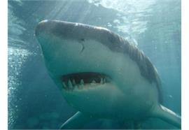 Fotokurs im Wasser: Unterwasser-Fotografie Weitwinkel + Fisheye